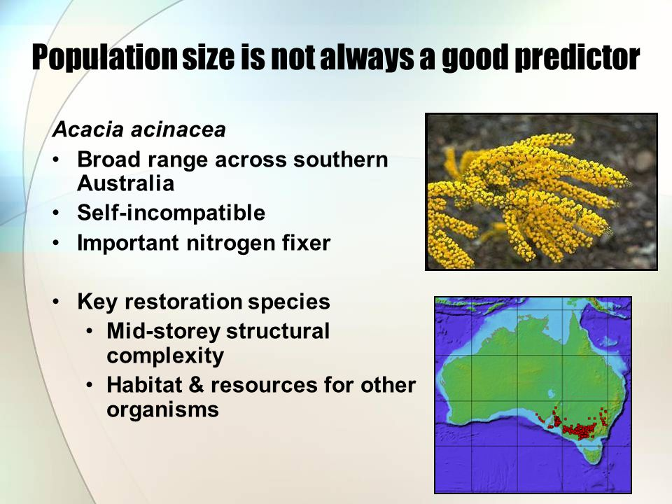 Acacia acinacea Broad range across southern Australia Self-incompatible Important nitrogen fixer Key restoration species Mid-storey structural complexity Habitat & resources for other organisms Population size is not always a good predictor