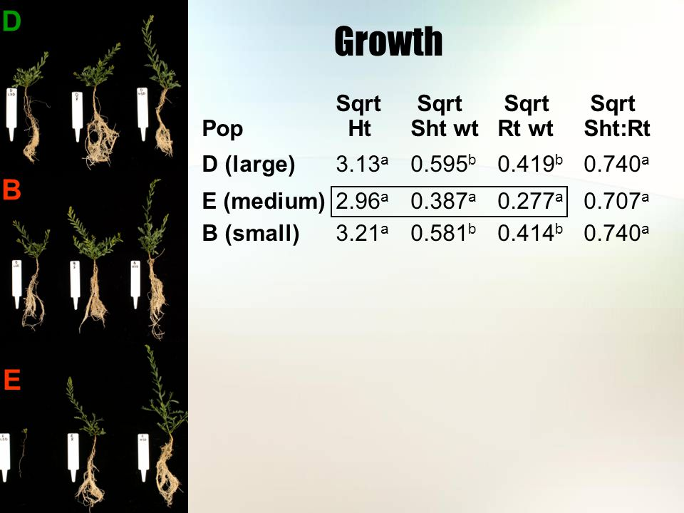 Growth Sqrt Sqrt Sqrt Sqrt Pop HtSht wtRt wtSht:Rt D (large) 3.13 a 0.595 b 0.419 b 0.740 a E (medium) 2.96 a 0.387 a 0.277 a 0.707 a B (small) 3.21 a 0.581 b 0.414 b 0.740 a D B E