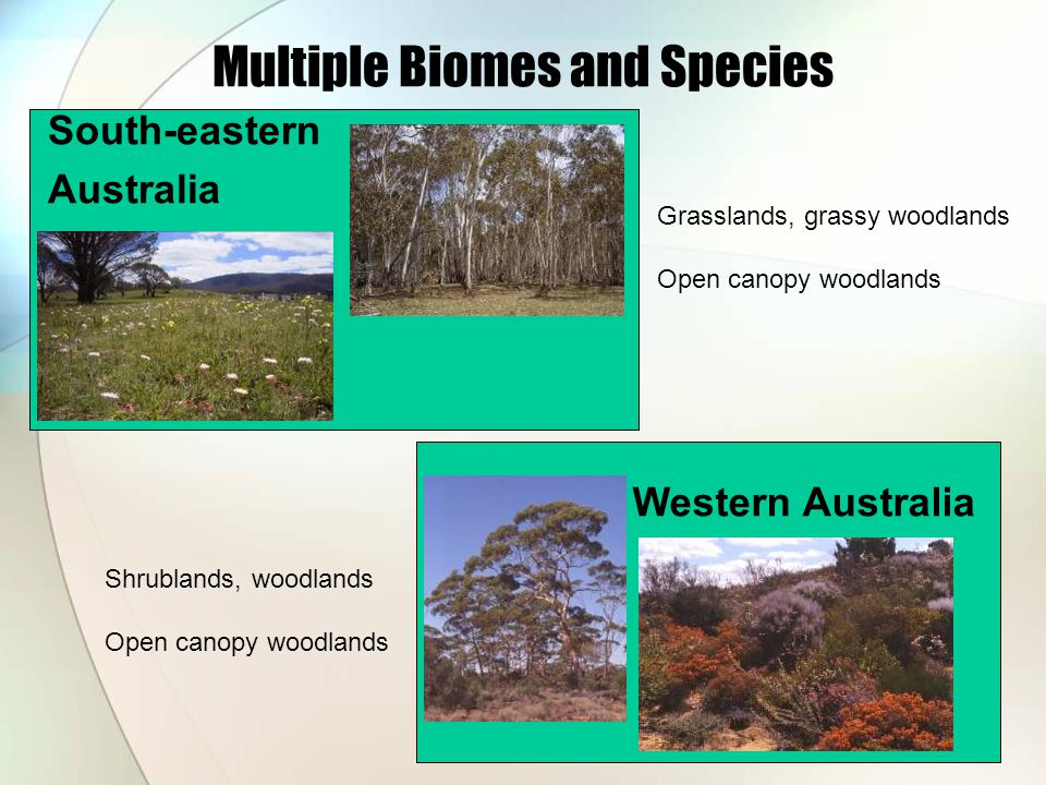 Multiple Biomes and Species Western Australia South-eastern Australia Grasslands, grassy woodlands Open canopy woodlands Shrublands, woodlands Open canopy woodlands