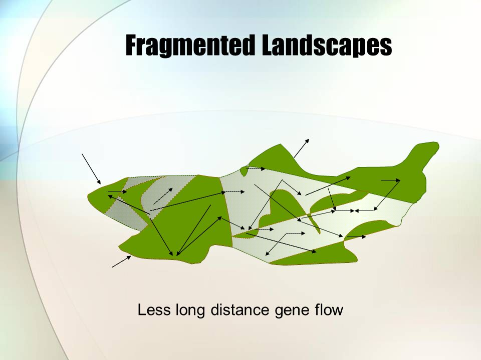 Less long distance gene flow