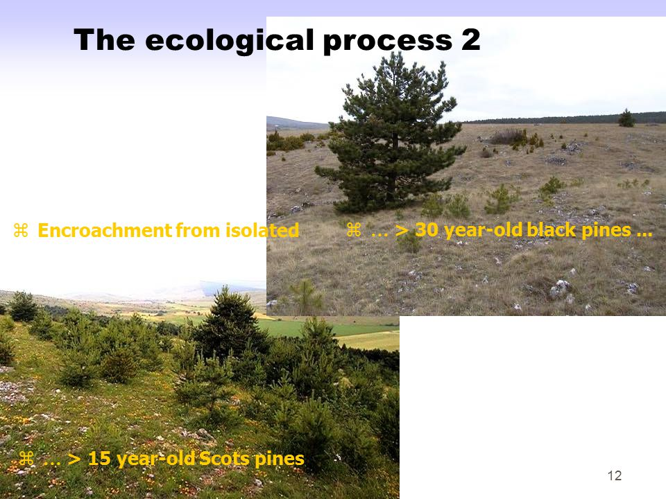 12 z … > 15 year-old Scots pines zEncroachment from isolatedz … > 30 year-old black pines...