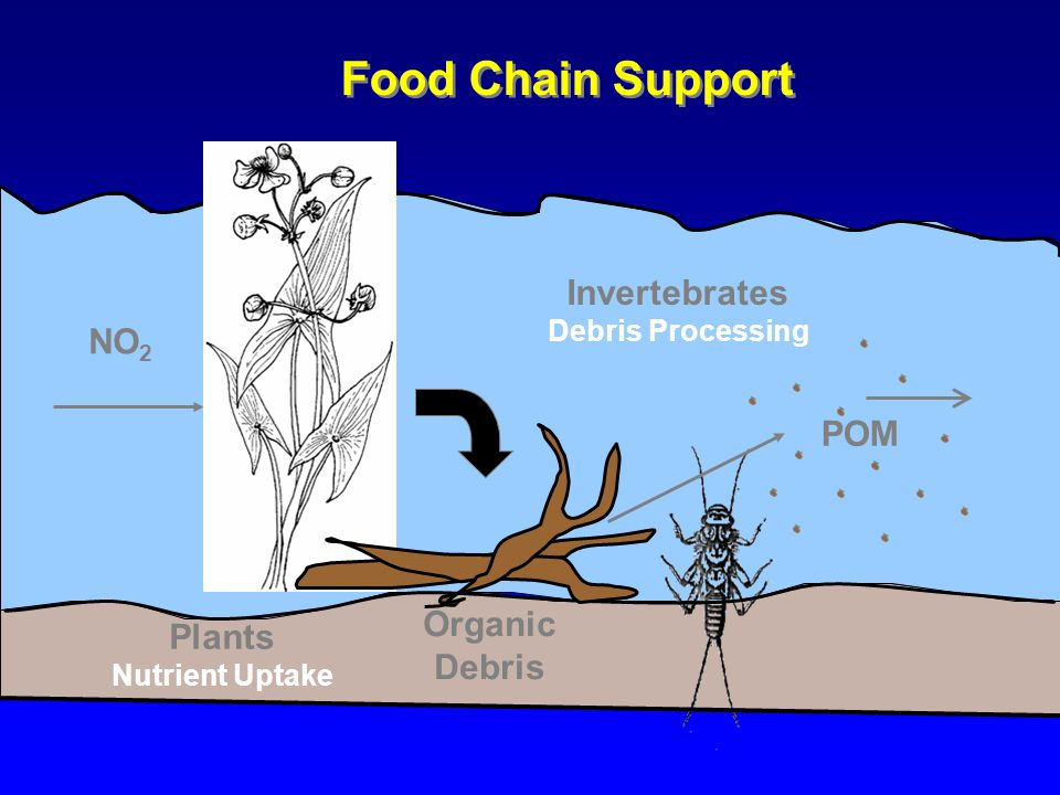 POM NO 2 Food Chain Support Plants Nutrient Uptake Organic Debris Invertebrates Debris Processing