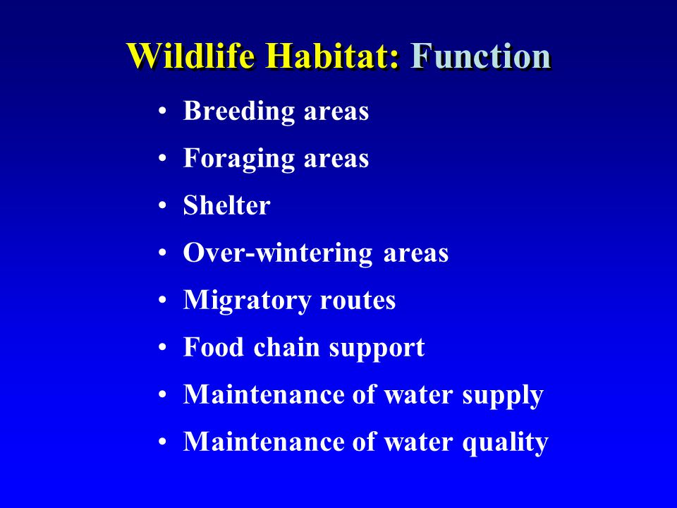 Wildlife Habitat: Function Breeding areas Foraging areas Shelter Over-wintering areas Migratory routes Food chain support Maintenance of water supply