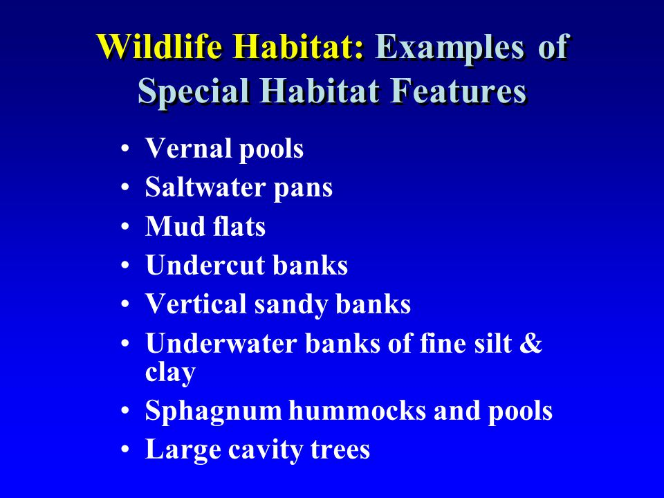 Wildlife Habitat: Examples of Special Habitat Features Vernal pools Saltwater pans Mud flats Undercut banks Vertical sandy banks Underwater banks of f