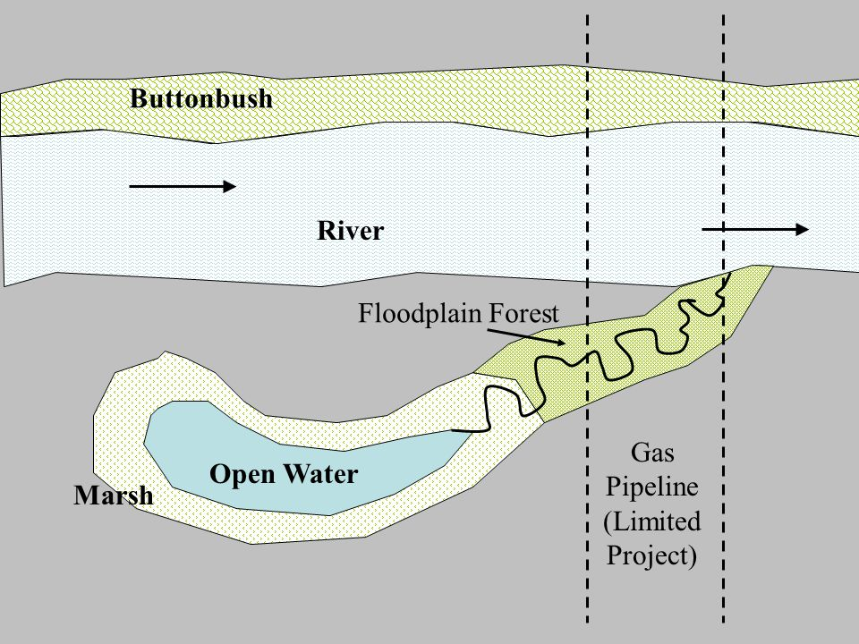 Buttonbush River Open Water Marsh Gas Pipeline (Limited Project) Floodplain Forest