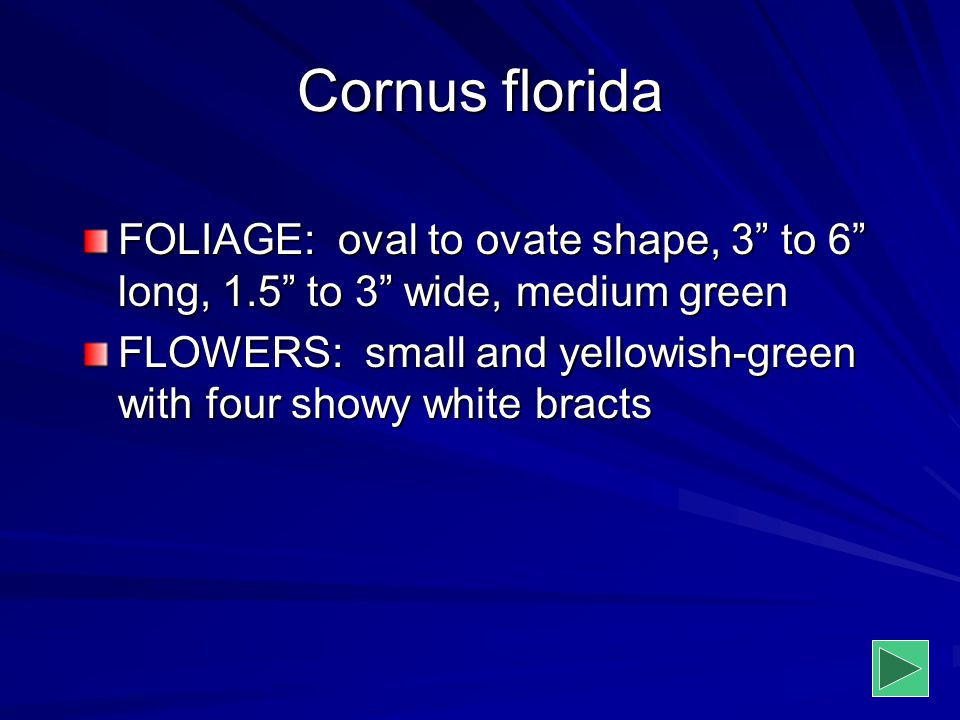 """Cornus florida FOLIAGE: oval to ovate shape, 3"""" to 6"""" long, 1.5"""" to 3"""" wide, medium green FLOWERS: small and yellowish-green with four showy white bra"""