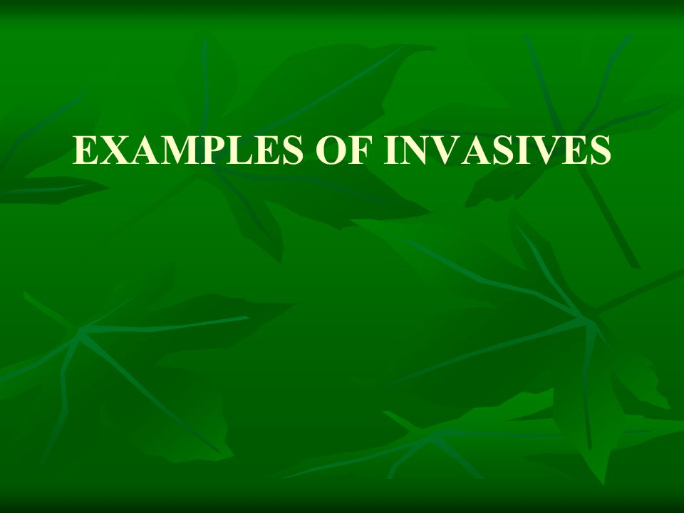 EXAMPLES OF INVASIVES