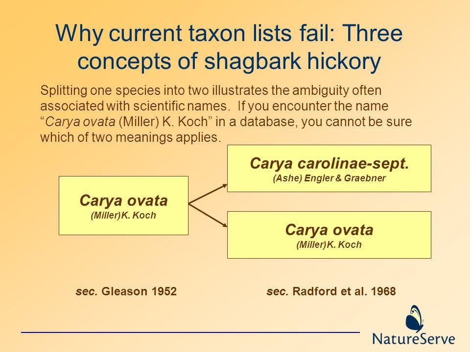 Carya ovata (Miller)K. Koch Carya carolinae-sept. (Ashe) Engler & Graebner Carya ovata (Miller)K. Koch sec. Gleason 1952sec. Radford et al. 1968 Why c