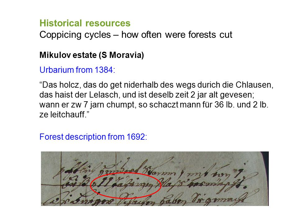 """Historical resources Coppicing cycles – how often were forests cut Mikulov estate (S Moravia) Urbarium from 1384: """"Das holcz, das do get niderhalb des"""