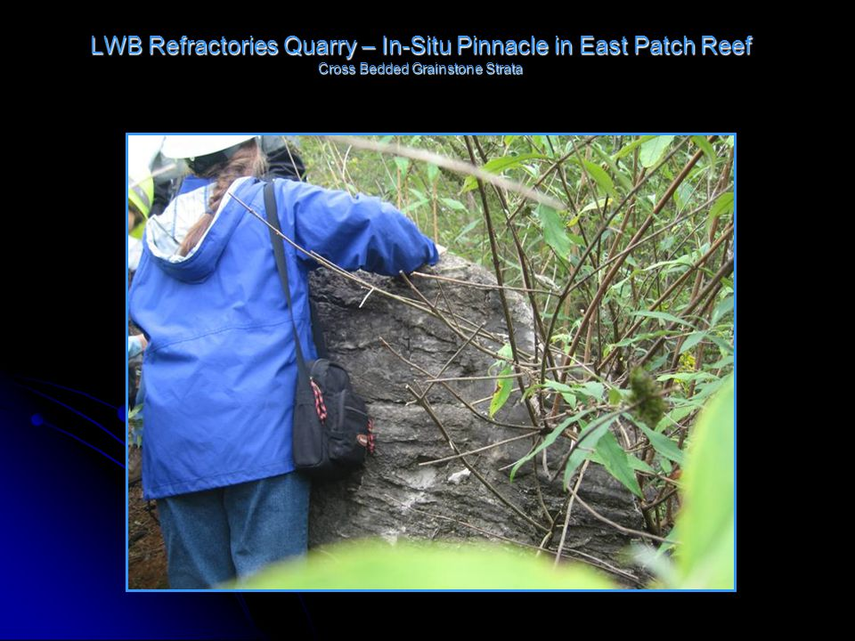 LWB Refractories Quarry – In-Situ Pinnacle in East Patch Reef Cross Bedded Grainstone Strata