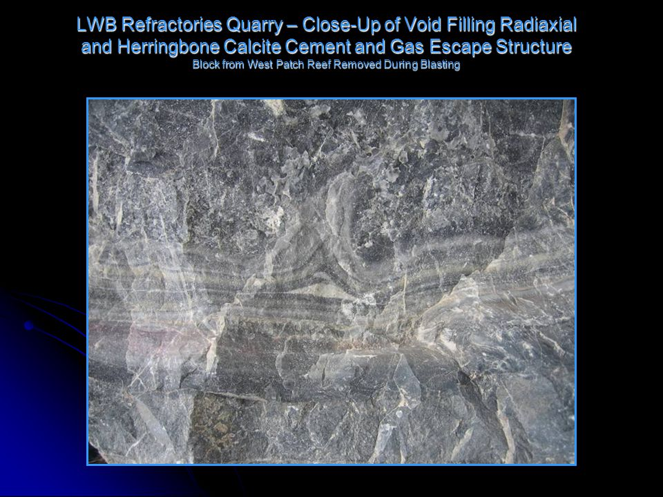 LWB Refractories Quarry – Close-Up of Void Filling Radiaxial and Herringbone Calcite Cement and Gas Escape Structure Block from West Patch Reef Removed During Blasting