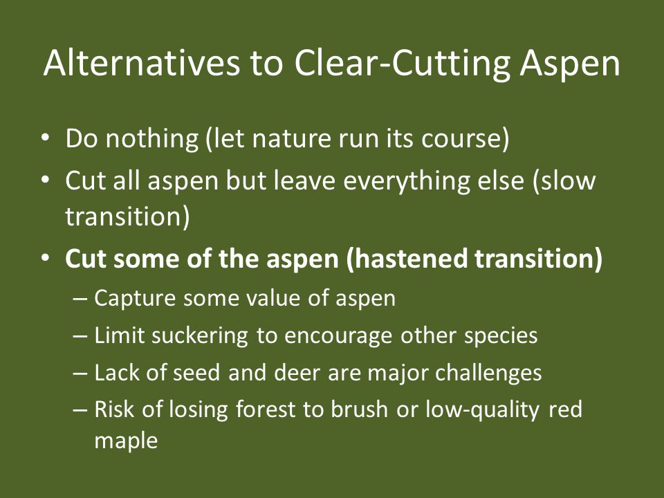 Alternatives to Clear-Cutting Aspen Do nothing (let nature run its course) Cut all aspen but leave everything else (slow transition) Cut some of the a