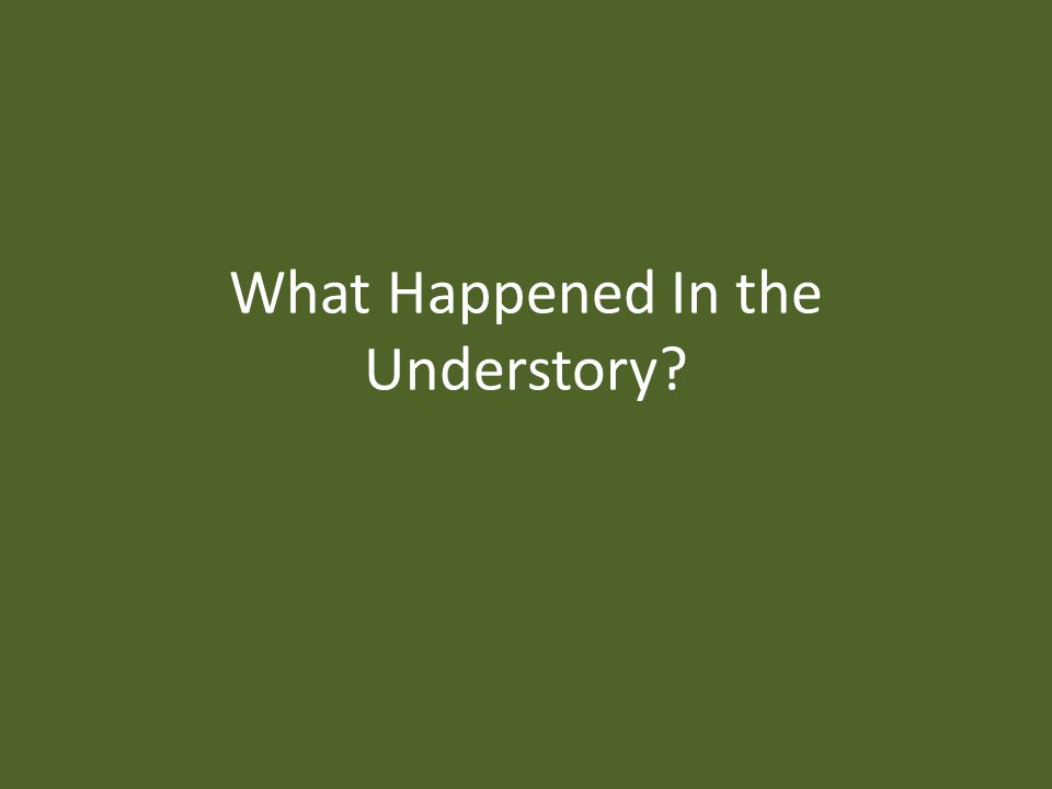 What Happened In the Understory?