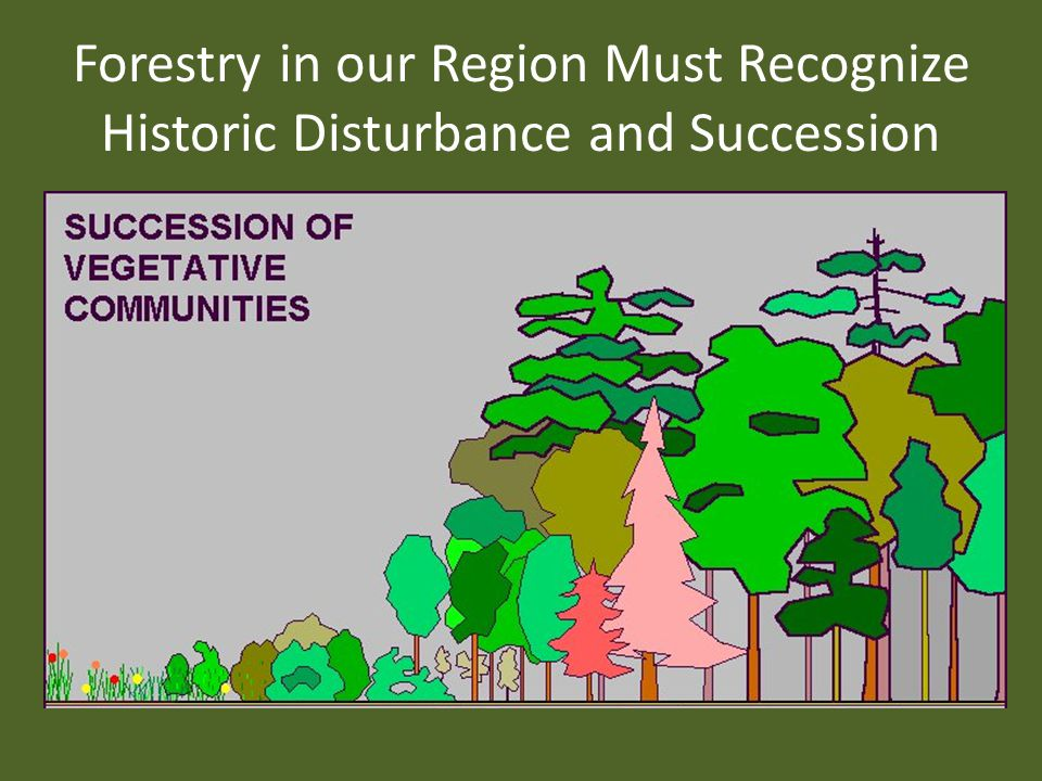 Forestry in our Region Must Recognize Historic Disturbance and Succession