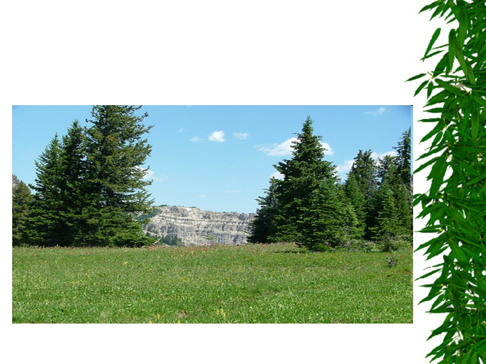 Secondary Succession  Sometimes an storms or fire destroy the species growing in a community.
