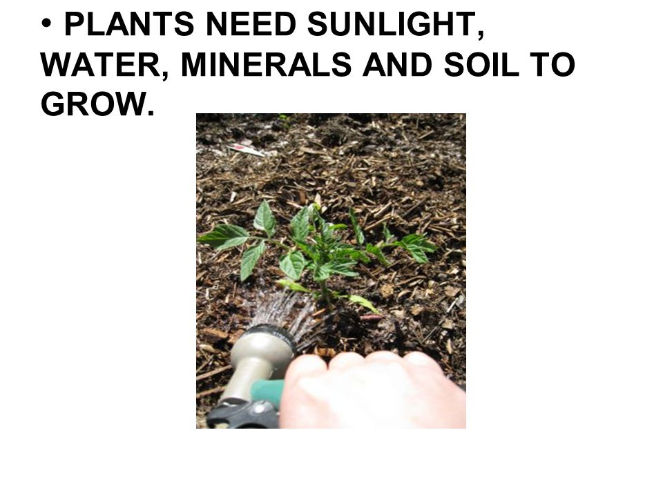 PLANTS NEED SUNLIGHT, WATER, MINERALS AND SOIL TO GROW.