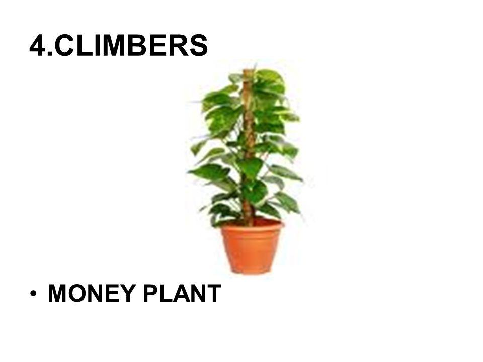 5.CREEPERS PUMPKIN PLANTWATERMELON PLANT