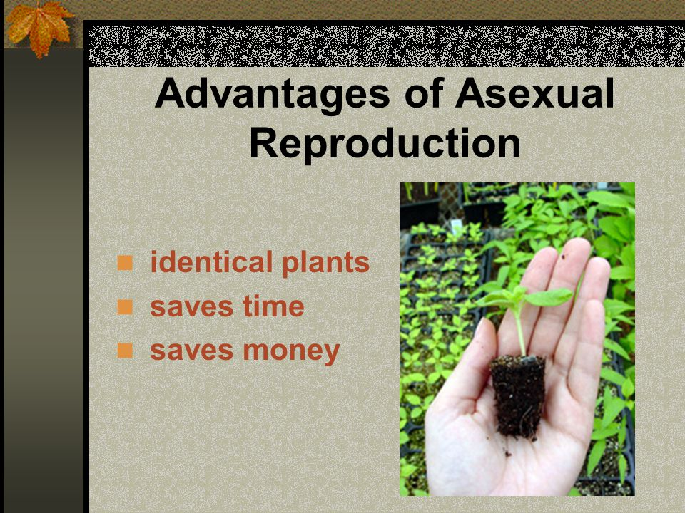 Types of Asexual Reproduction Vegetative reproduction Vegetative propagation