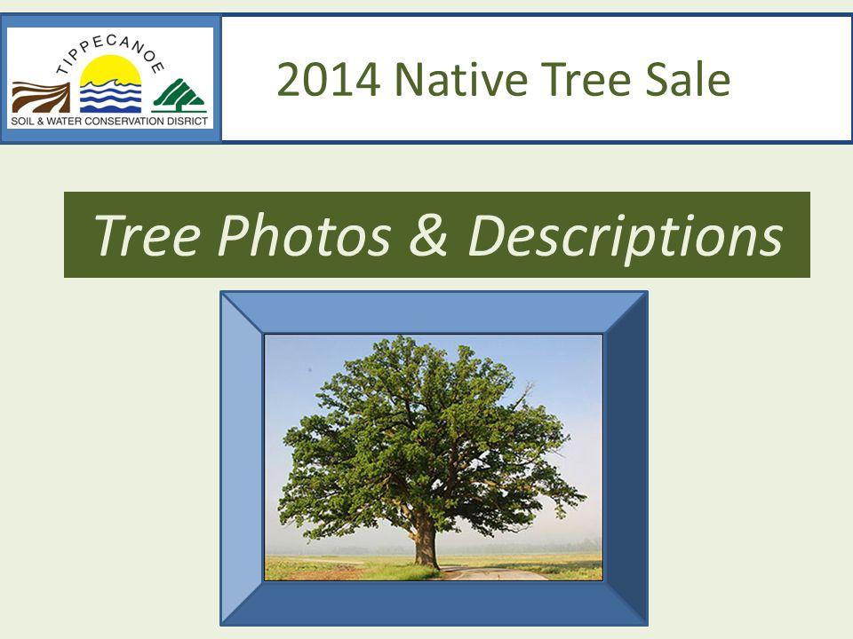 2014 Native Tree Sale Tree Photos & Descriptions