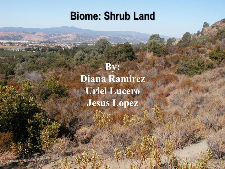Biome: Shrub Land By: Diana Ramirez Uriel Lucero Jesus Lopez