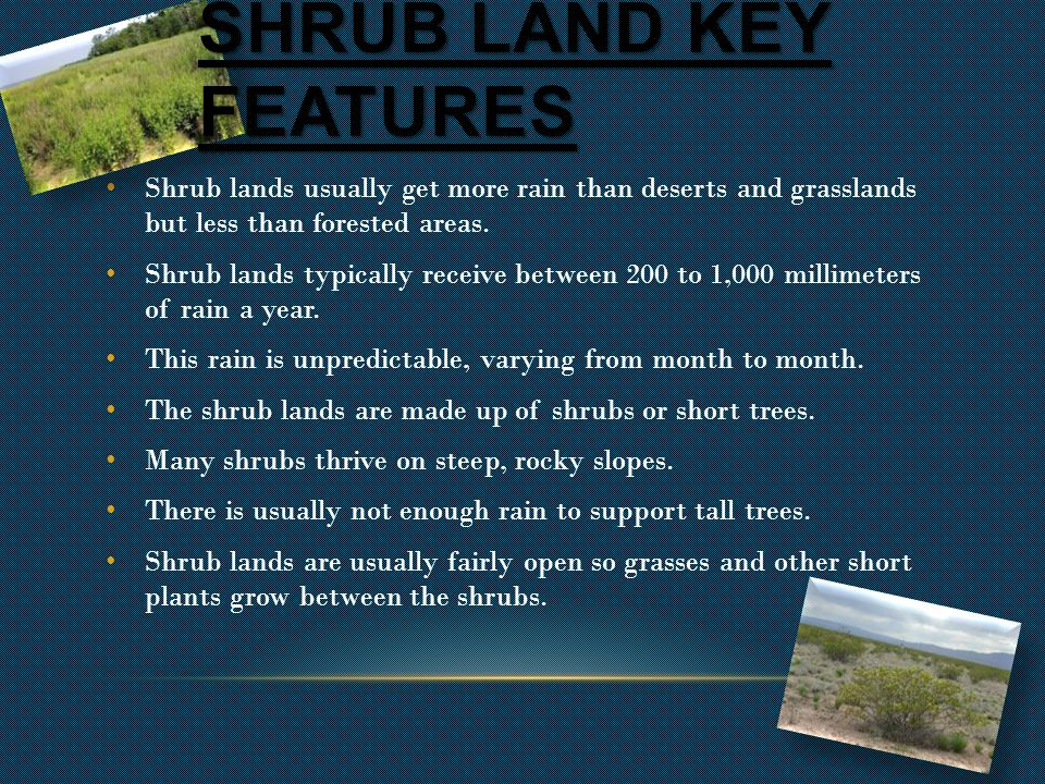 Shrub lands usually get more rain than deserts and grasslands but less than forested areas.