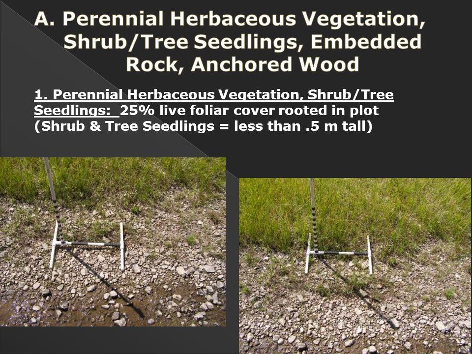 1. Perennial Herbaceous Vegetation, Shrub/Tree Seedlings: 25% live foliar cover rooted in plot (Shrub & Tree Seedlings = less than.5 m tall)