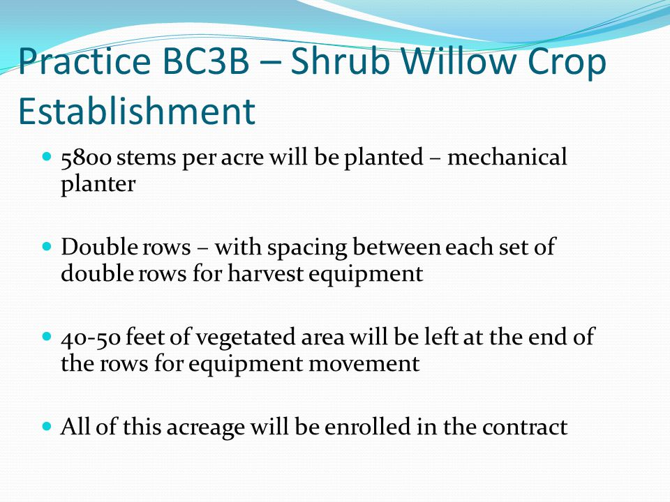 Practice BC3B – Shrub Willow Crop Establishment 5800 stems per acre will be planted – mechanical planter Double rows – with spacing between each set of double rows for harvest equipment 40-50 feet of vegetated area will be left at the end of the rows for equipment movement All of this acreage will be enrolled in the contract