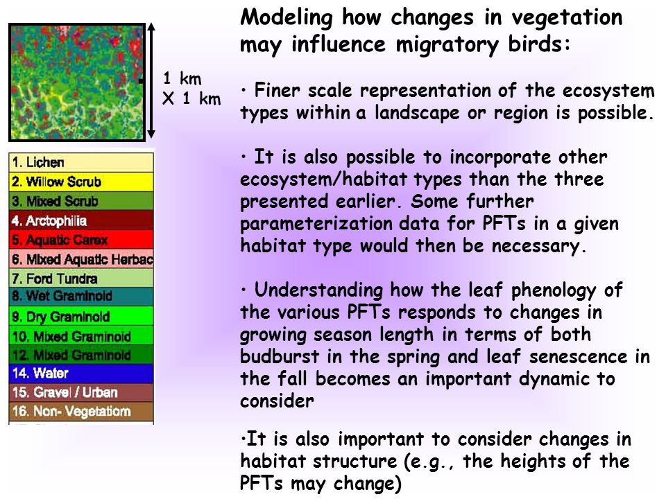 1 km X 1 km Modeling how changes in vegetation may influence migratory birds: Finer scale representation of the ecosystem types within a landscape or