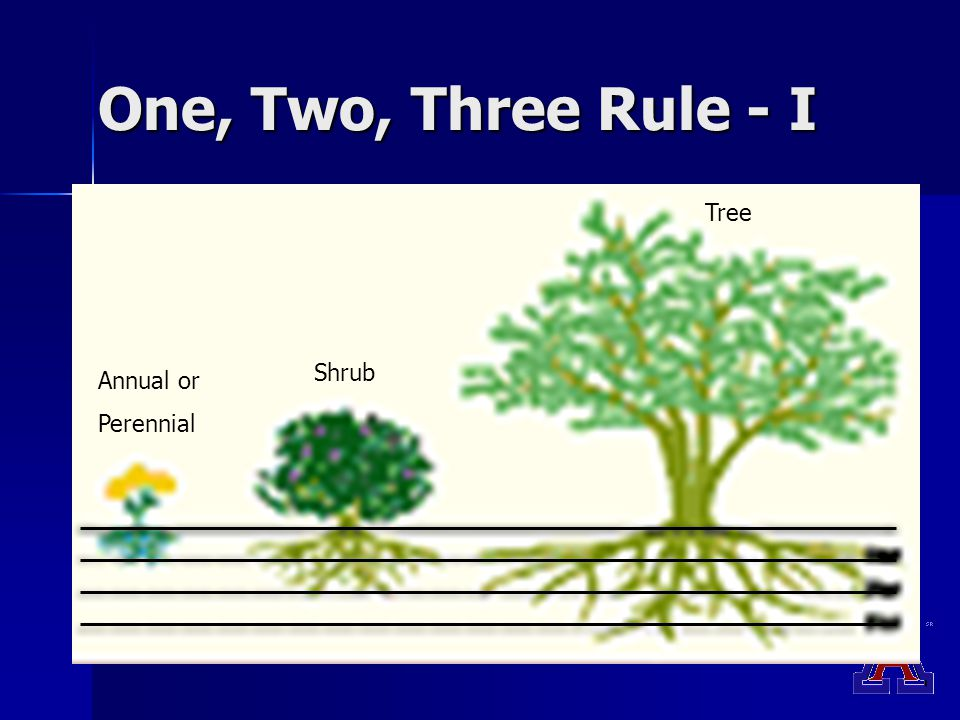 One, Two, Three Rule - I Annual or Perennial Shrub Tree
