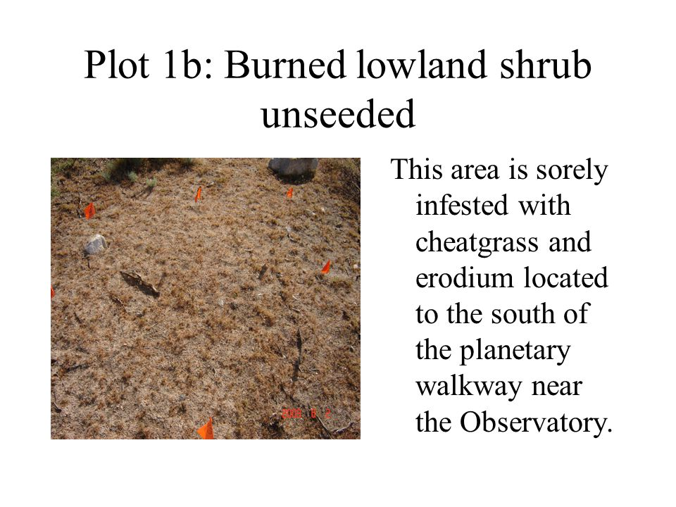 Plot 1b: Burned lowland shrub unseeded This area is sorely infested with cheatgrass and erodium located to the south of the planetary walkway near the