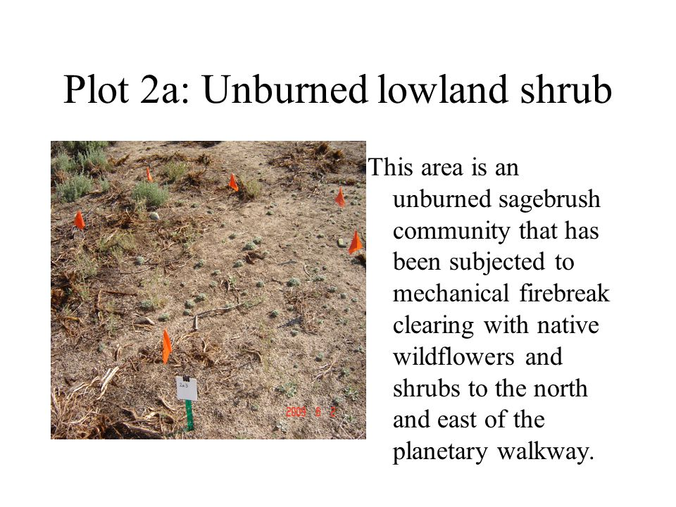 Plot 2a: Unburned lowland shrub This area is an unburned sagebrush community that has been subjected to mechanical firebreak clearing with native wildflowers and shrubs to the north and east of the planetary walkway.