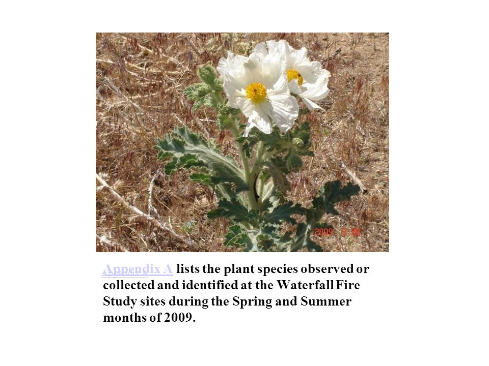 Appendix AAppendix A lists the plant species observed or collected and identified at the Waterfall Fire Study sites during the Spring and Summer months of 2009.