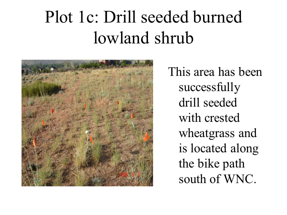 Plot 1c: Drill seeded burned lowland shrub This area has been successfully drill seeded with crested wheatgrass and is located along the bike path sou
