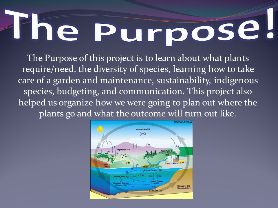 The Purpose of this project is to learn about what plants require/need, the diversity of species, learning how to take care of a garden and maintenance, sustainability, indigenous species, budgeting, and communication.