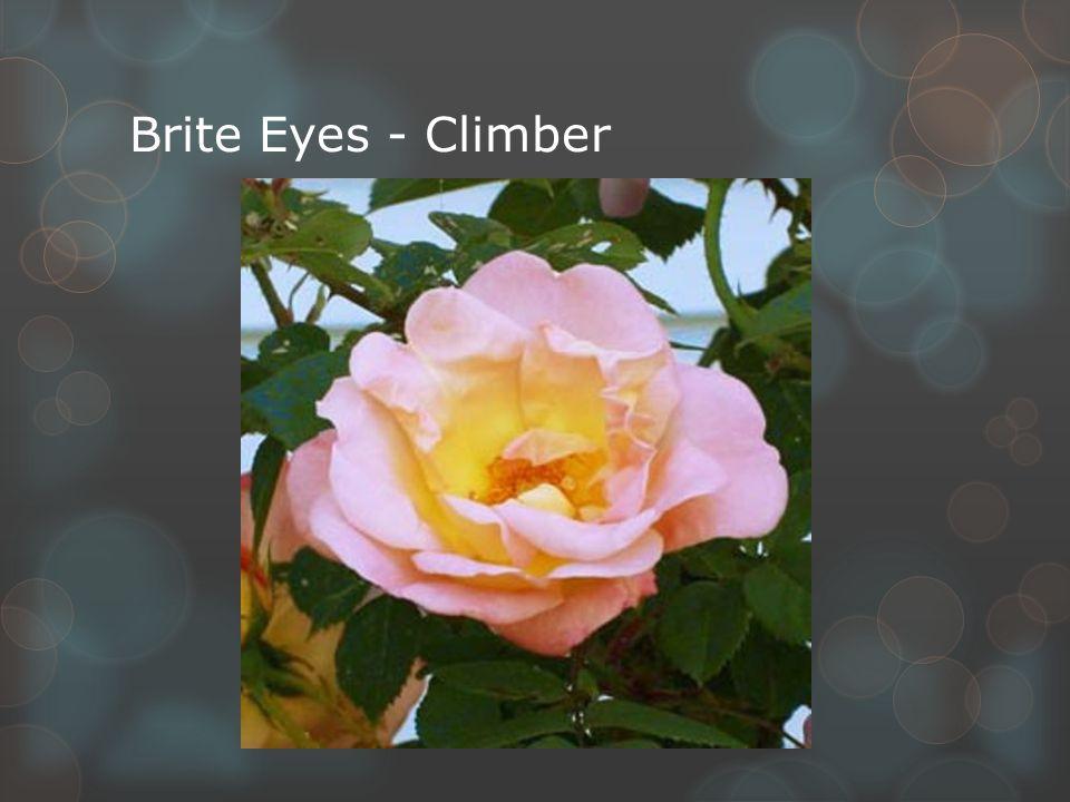 Brite Eyes - Climber