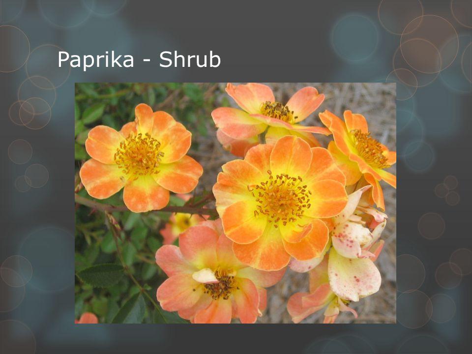 Paprika - Shrub