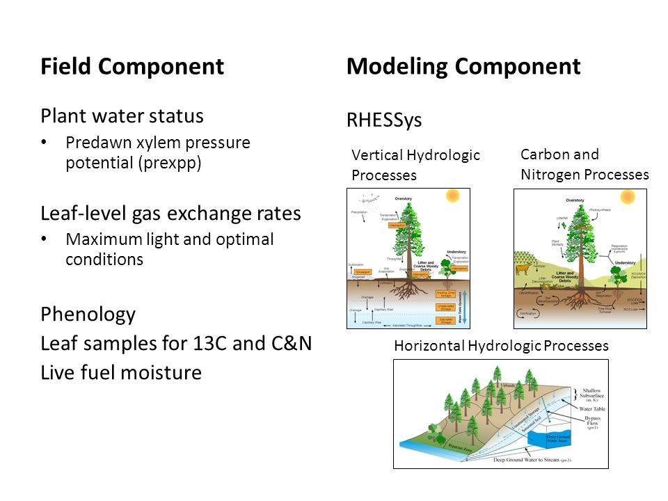 Field Component Plant water status Predawn xylem pressure potential (prexpp) Leaf-level gas exchange rates Maximum light and optimal conditions Phenology Leaf samples for 13C and C&N Live fuel moisture Modeling Component Carbon and Nitrogen Processes Vertical Hydrologic Processes Horizontal Hydrologic Processes RHESSys