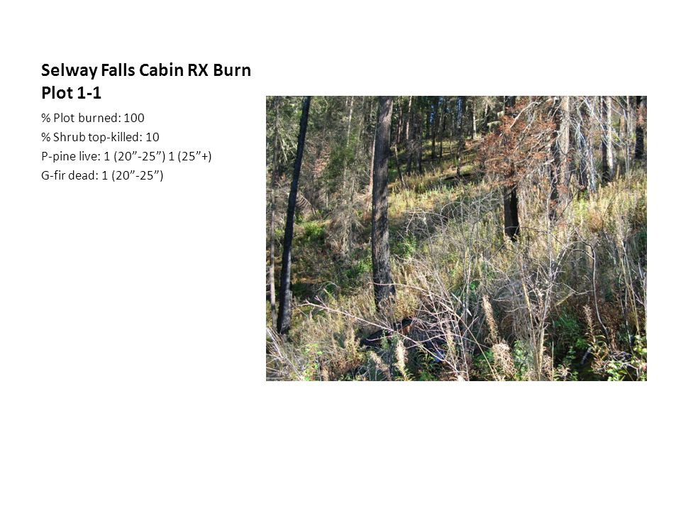 Selway Falls Cabin RX Burn Plot 1-1 % Plot burned: 100 % Shrub top-killed: 10 P-pine live: 1 (20 -25 ) 1 (25 +) G-fir dead: 1 (20 -25 )