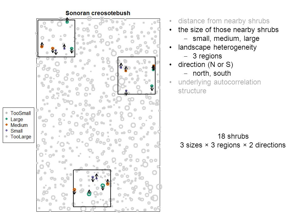18 shrubs 3 sizes × 3 regions × 2 directions distance from nearby shrubs the size of those nearby shrubs ‒ small, medium, large landscape heterogeneity ‒ 3 regions direction (N or S) ‒ north, south underlying autocorrelation structure