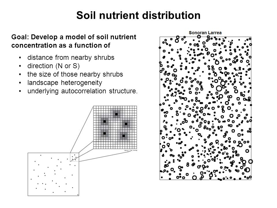 Goal: Develop a model of soil nutrient concentration as a function of distance from nearby shrubs direction (N or S) the size of those nearby shrubs landscape heterogeneity underlying autocorrelation structure.