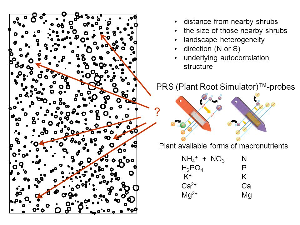 distance from nearby shrubs the size of those nearby shrubs landscape heterogeneity direction (N or S) underlying autocorrelation structure PRS (Plant Root Simulator)™-probes NH 4 + + NO 3 - N H 2 PO 4 - P K + K Ca 2+ Ca Mg 2+ Mg Plant available forms of macronutrients ?