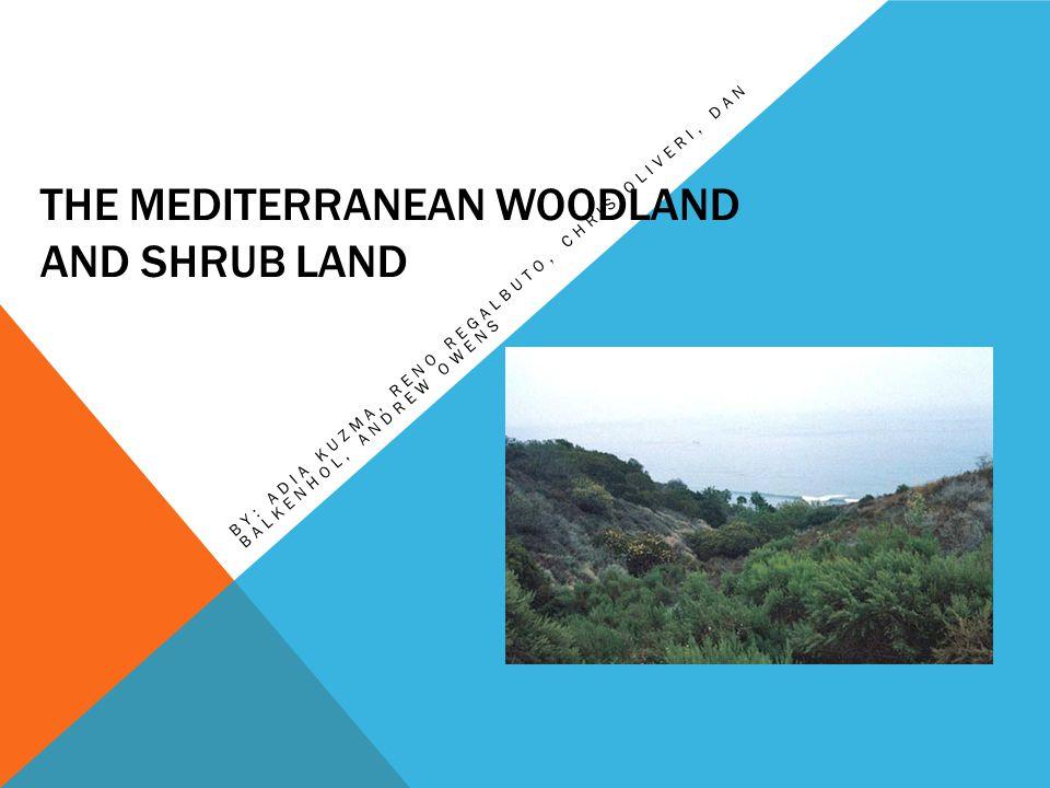 THE MEDITERRANEAN WOODLAND AND SHRUB LAND BY: ADIA KUZMA, RENO REGALBUTO, CHRIS OLIVERI, DAN BALKENHOL, ANDREW OWENS