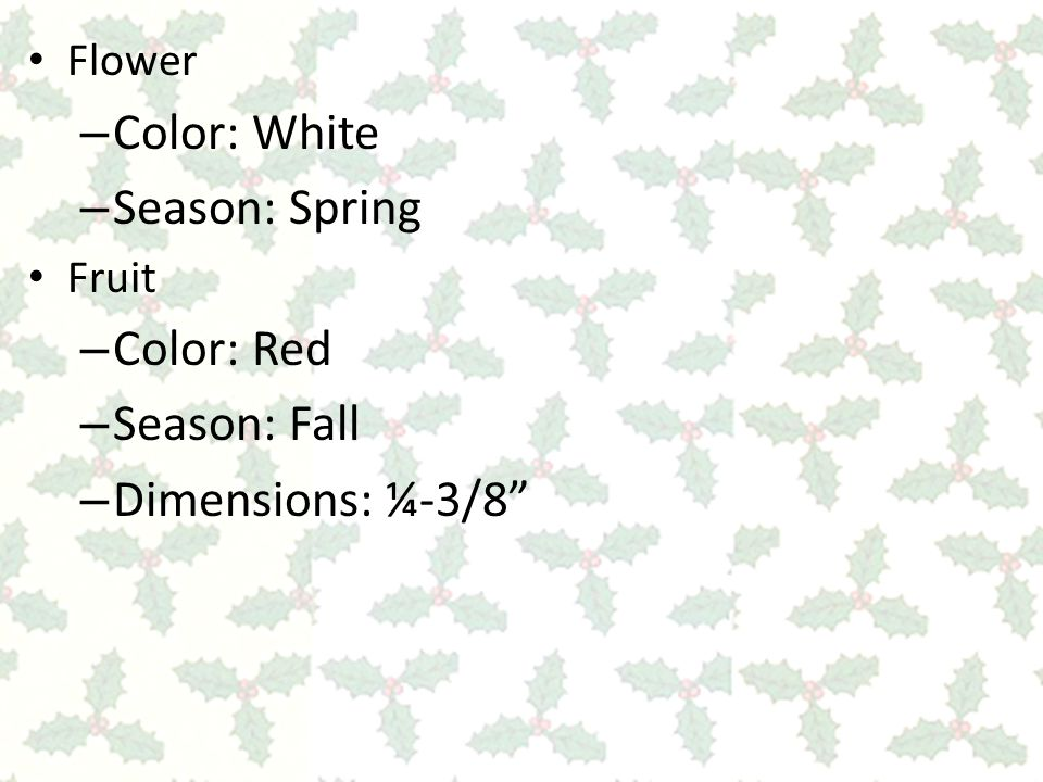 Flower – Color: White – Season: Spring Fruit – Color: Red – Season: Fall – Dimensions: ¼-3/8