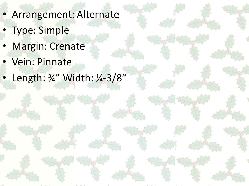 Arrangement: Alternate Type: Simple Margin: Crenate Vein: Pinnate Length: ¾ Width: ¼-3/8
