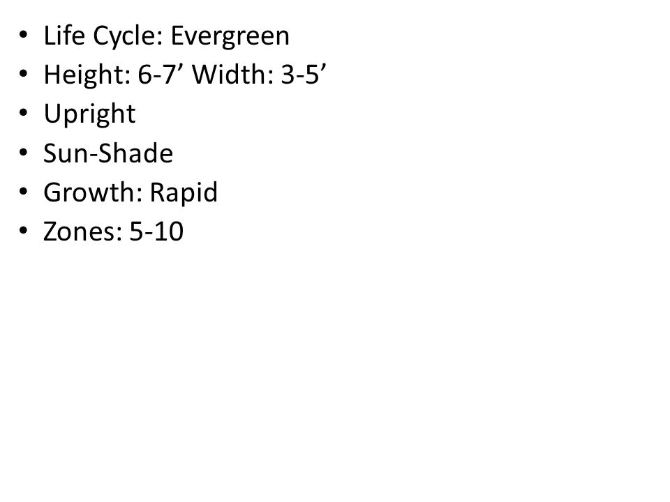 Life Cycle: Evergreen Height: 25' Width: 6-8' Sun-Part Shade Growth: Medium Zones: 6-9