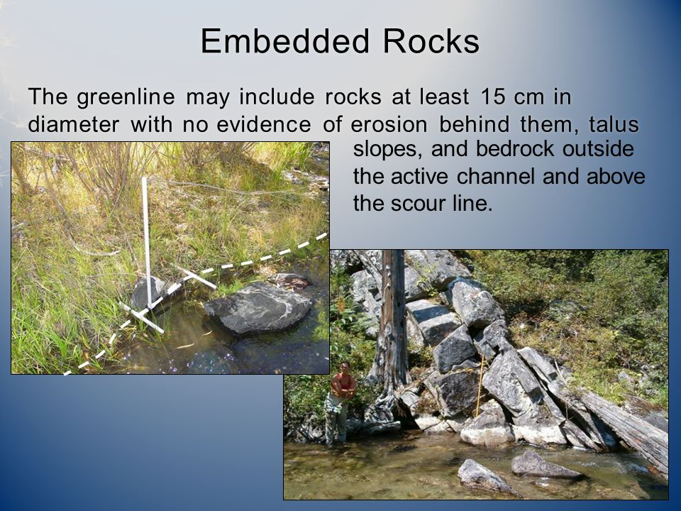 The greenline may include rocks at least 15 cm in diameter with no evidence of erosion behind them, talus Embedded RocksEmbedded Rocks slopes, and bedrock outside the active channel and above the scour line.