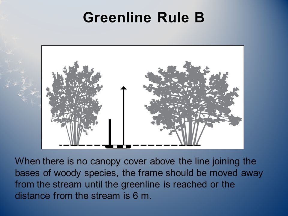 Greenline Rule BGreenline Rule B When there is no canopy cover above the line joining the bases of woody species, the frame should be moved away from the stream until the greenline is reached or the distance from the stream is 6 m.