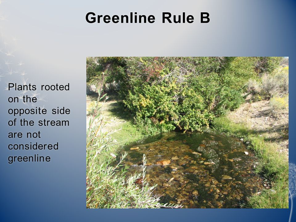 Plants rooted on the opposite side of the stream are not considered greenline Greenline Rule BGreenline Rule B