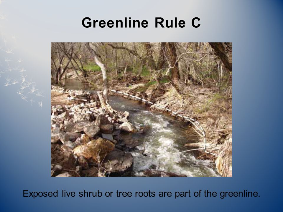 Exposed live shrub or tree roots are part of the greenline. Greenline Rule CGreenline Rule C