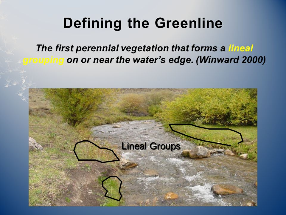 Defining the GreenlineDefining the Greenline The first perennial vegetation that forms a lineal grouping on or near the water's edge.